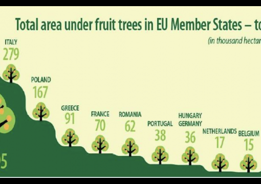 Fruit Trees In Europe